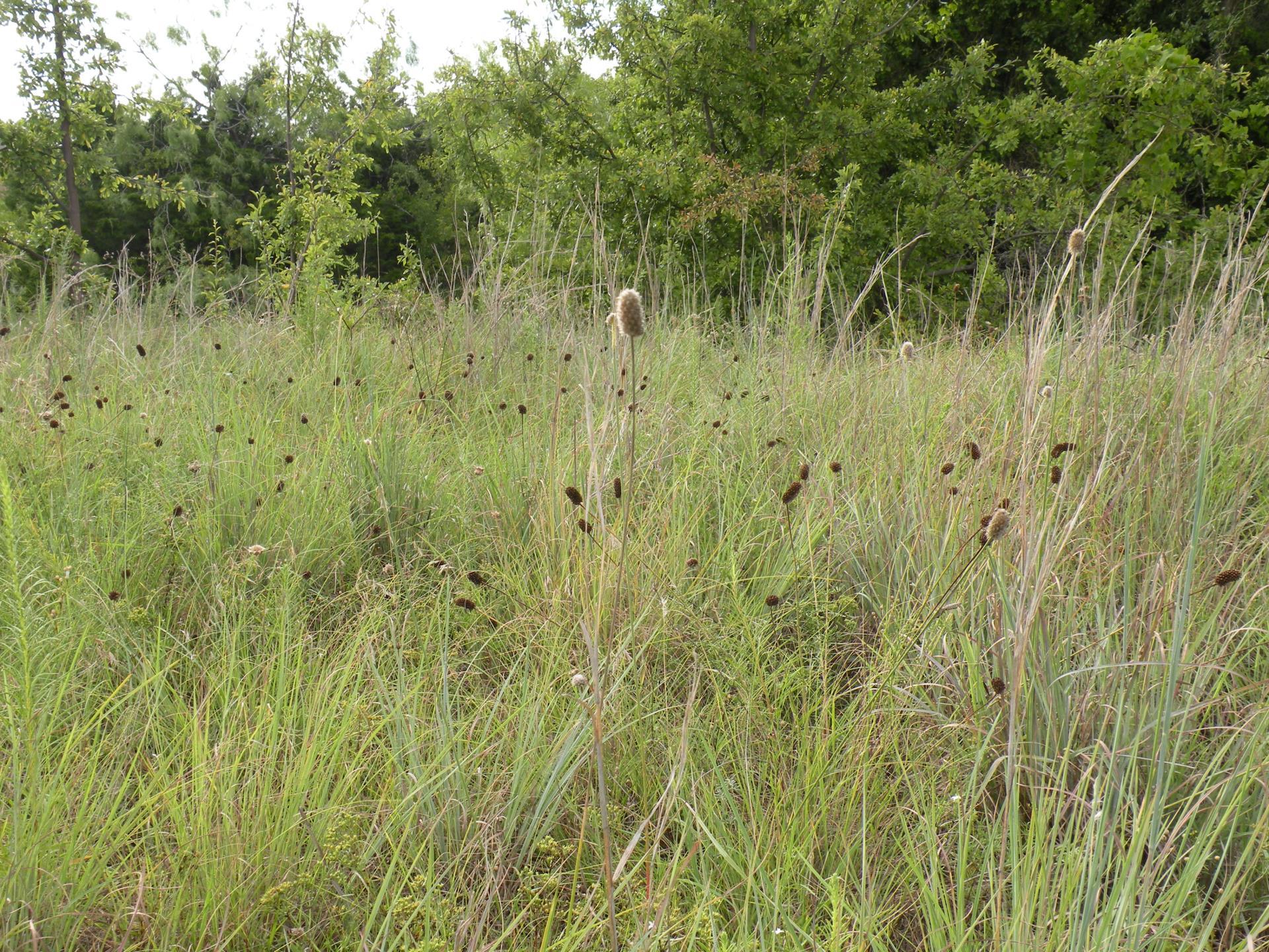 Prairie before 2